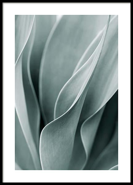 Agave Leaves No3 Poster en el grupo  Pósters / Botánica con Desenio AB (11661)