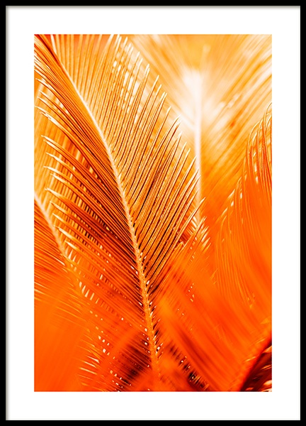 Orange and Gold Palm Poster en el grupo  Pósters / Botánica con Desenio AB (12403)