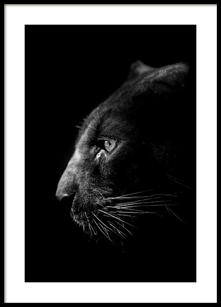 Panther B&W Poster en el grupo  Pósters / Animales / Animales Salvajes con Desenio AB (13867)
