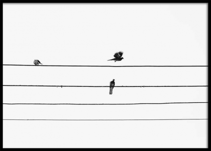Birds On The Wire Poster en el grupo  Pósters / Blanco y negro con Desenio AB (3105)