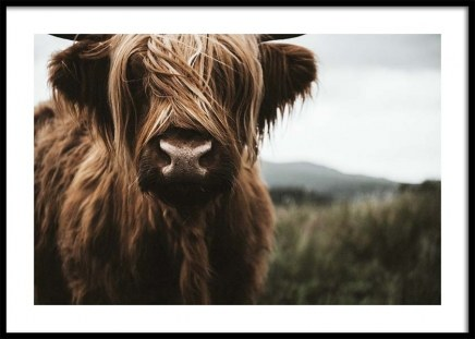 Highland Cattle Poster en el grupo  Pósters / Animales con Desenio AB (3542)