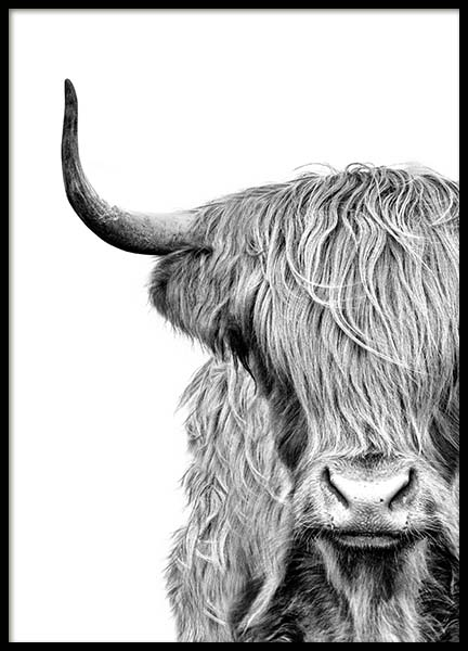 Highland Cow Close Up Poster en el grupo  Pósters / Blanco y negro con Desenio AB (3638)
