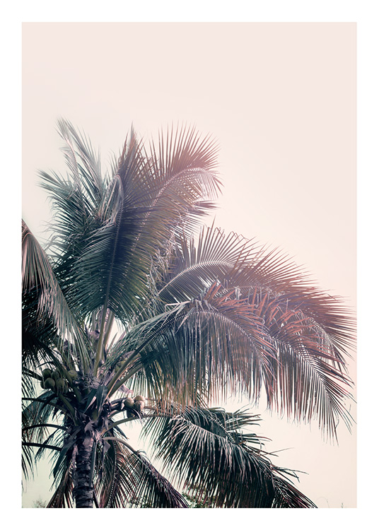 A Palm Tree Dream Poster / Palmeras con Desenio AB (10169)