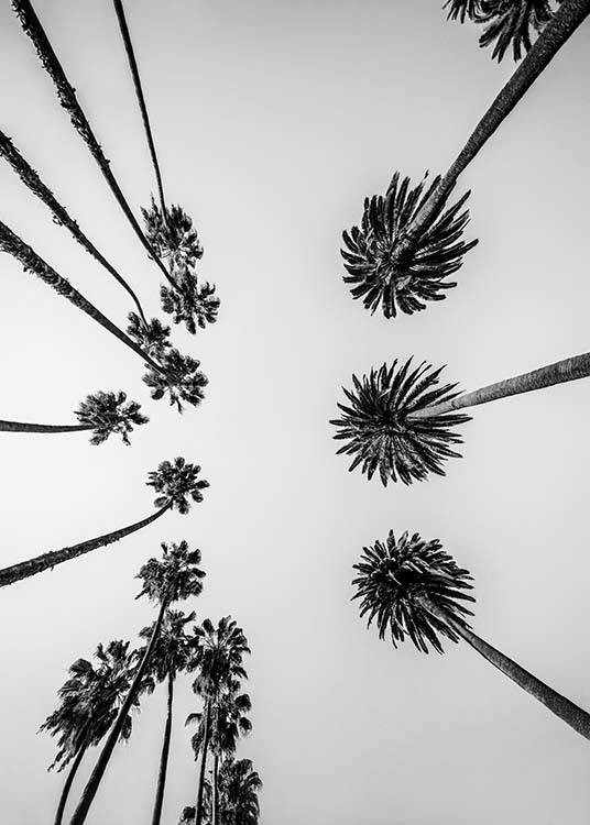 Palm Trees Above Poster / Blanco y negro con Desenio AB (10234)