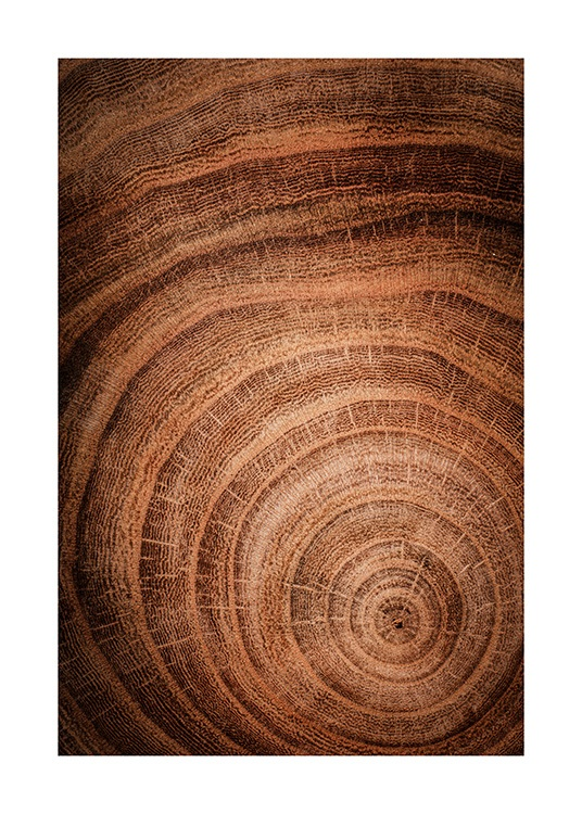 Growth Rings Poster / Naturaleza con Desenio AB (11873)