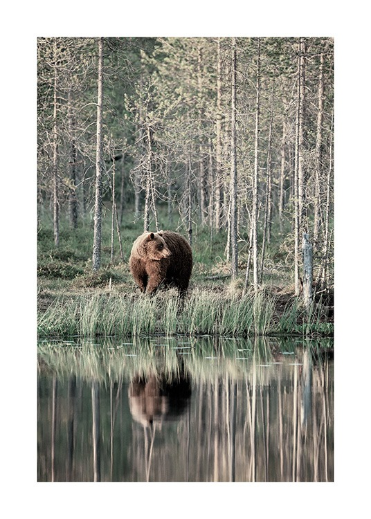 Bear by Lake Poster / Animales con Desenio AB (13591)