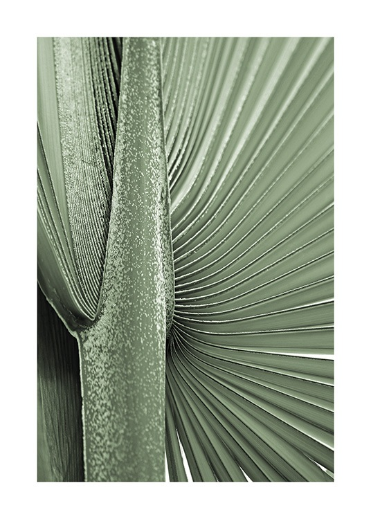 Young Palm Leaf Poster / Palmeras con Desenio AB (13611)
