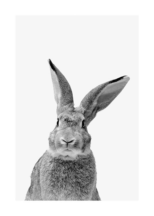 Black and White Rabbit Poster / Animales con Desenio AB (13859)