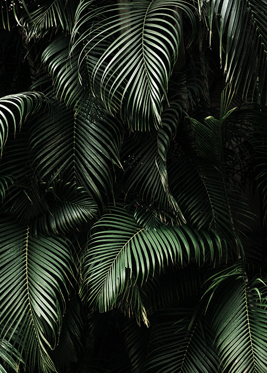 Dark Green Palm Leaves No2 Poster / Fotografías con Desenio AB (3773)