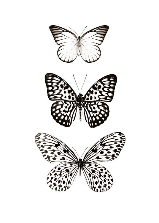 Three Butterflies, Posters / Animales con Desenio AB (7978)