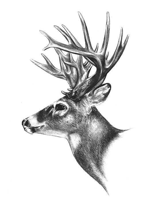 Deer Black And White, Poster / Blanco y negro con Desenio AB (8106)