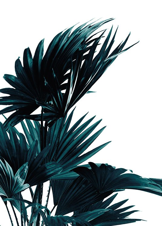 Palm Leaves, Poster / Botánica con Desenio AB (8318)